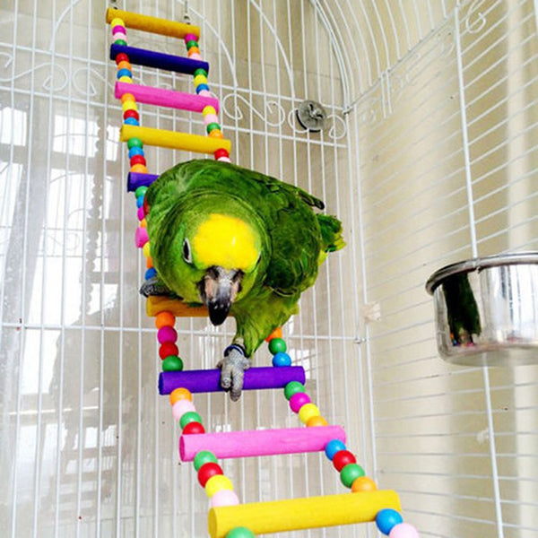 green parrot on ladder