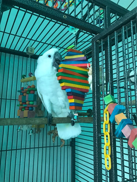 Cockatoo playing with large wooden chew toy