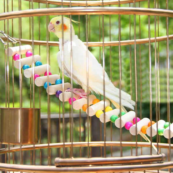 Cockatiel on bird toy bridge