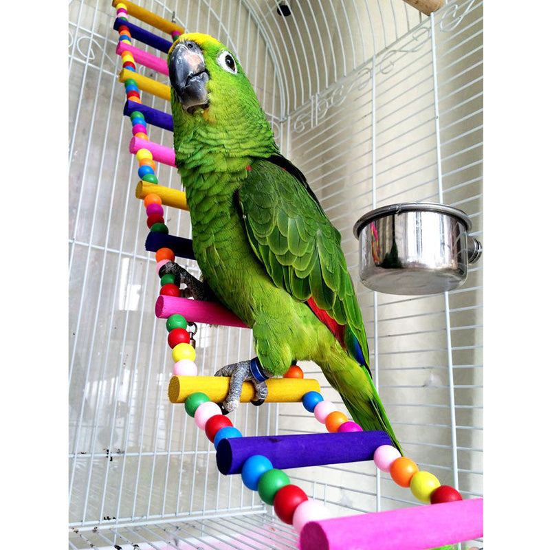 Green parrot on rainbow ladder toy