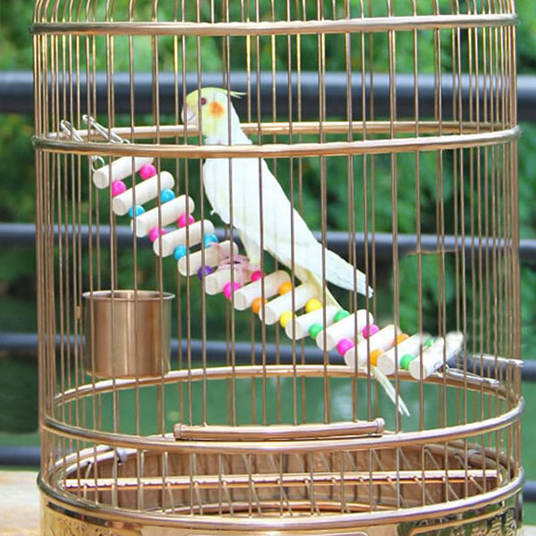 Cockatiel on bird toy bridge looking