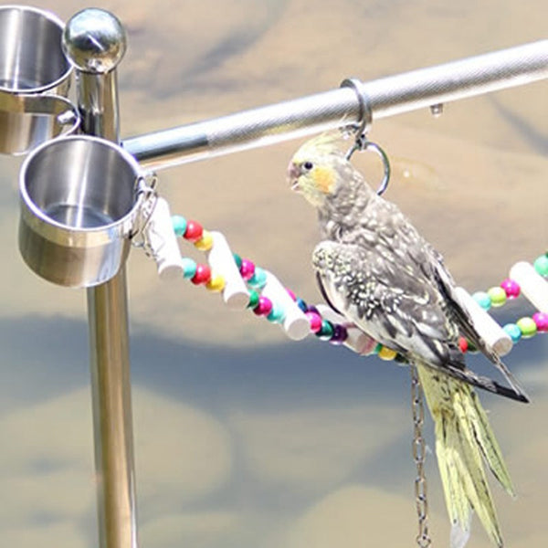 Cockatiel on bird toy bridge playing