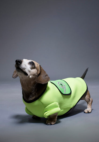 Sniffie Dog Fashion Wet Suit Tops