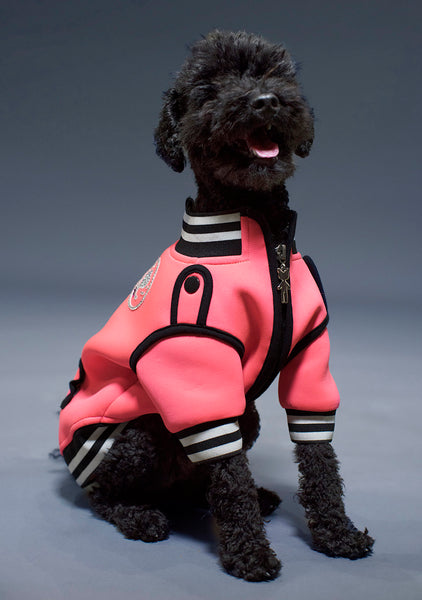 Sniffie Dog Fashion Wetsuit Jacket