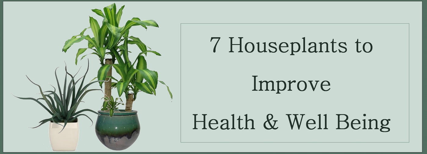 7 Houseplants that Improve Your Health and Wellbeing!