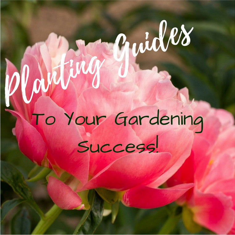 Planting Guides - Invested in Your Gardening Success!