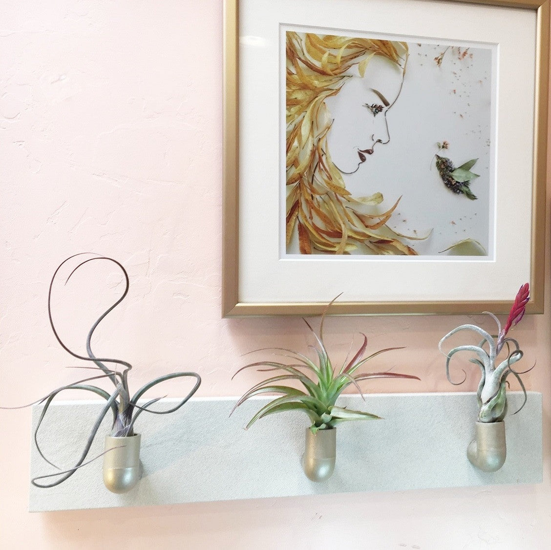 Tillandsia Wall Fountain - DIY Hanging Air Plants - Easy to Grow Bulbs