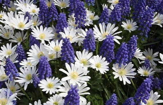 The Secret To Massively Increased Blooms In Same Space Flower Bulb Easy To Grow Bulbs