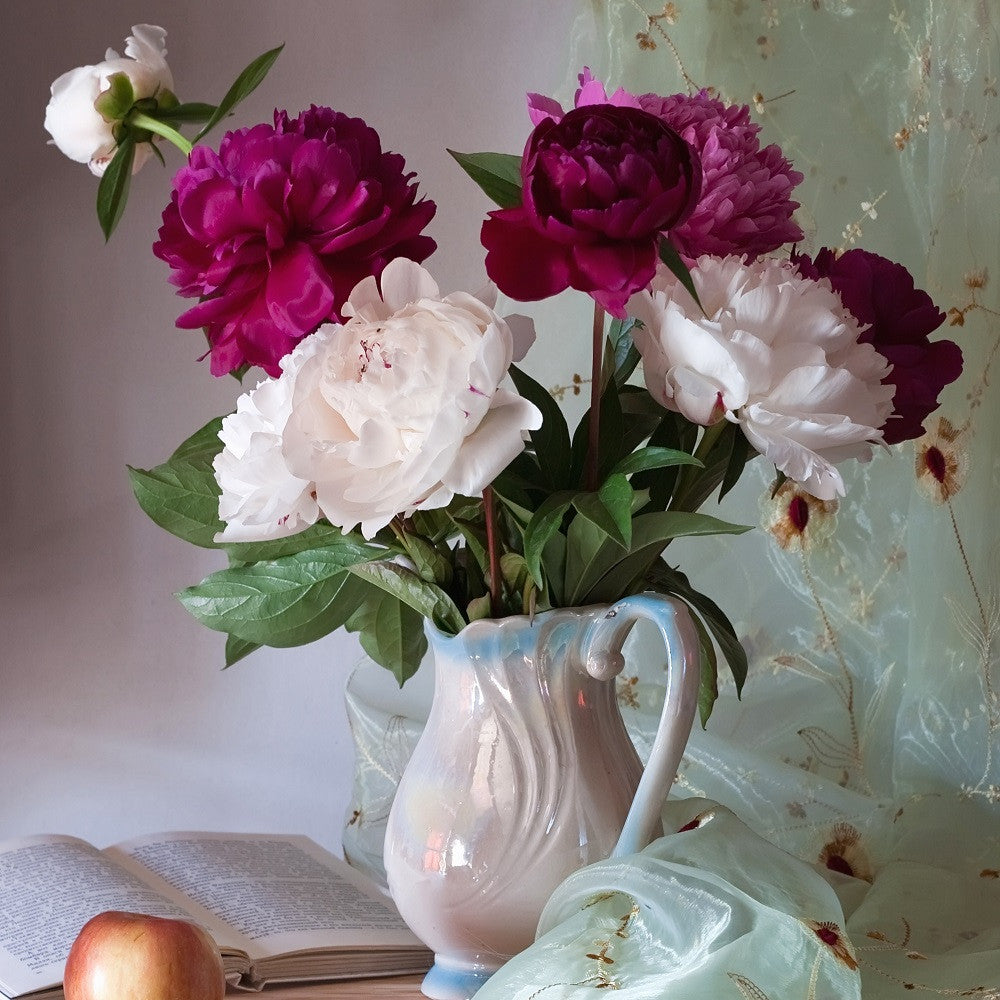 Peony Tips for Warm Region Gardeners
