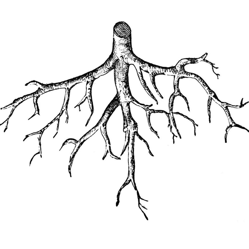 Importance of Healthy Roots for Plants - Easy To Grow Bulbs