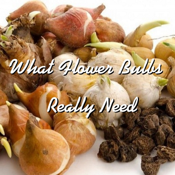 A Flower Bulb's Greatest Need? To Bloom!