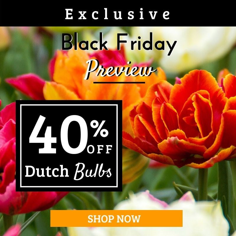 Dutch Bulb Sale