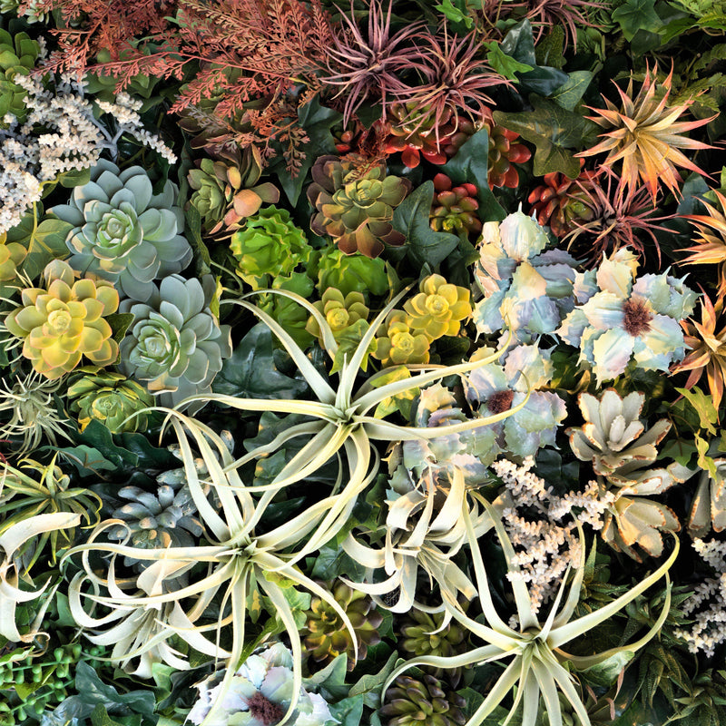 Succulents & Air Plants