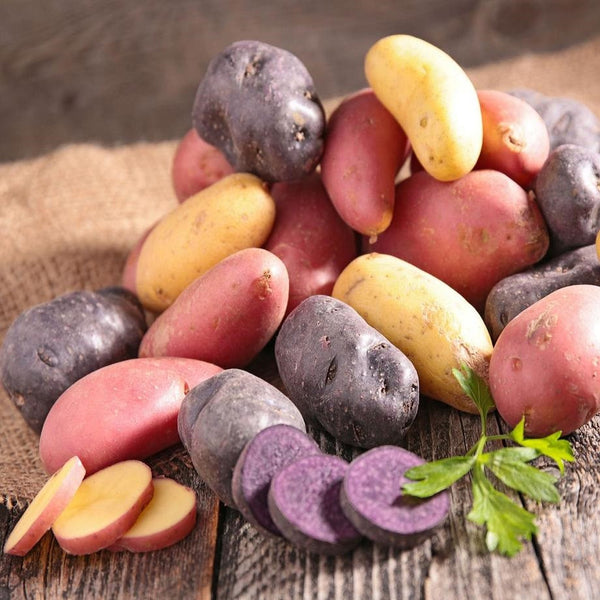 Potatoes - Organic Seed Potatoes
