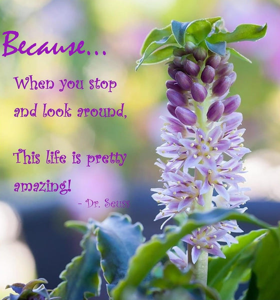 Dr. Seuss quote - Because when you look around thris life is pretty amazing