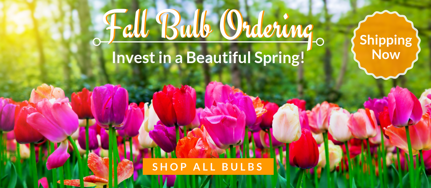 Easy To Grow Bulbs Buy Flower Bulbs Online