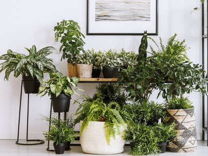 SHOP HOUSEPLANTS