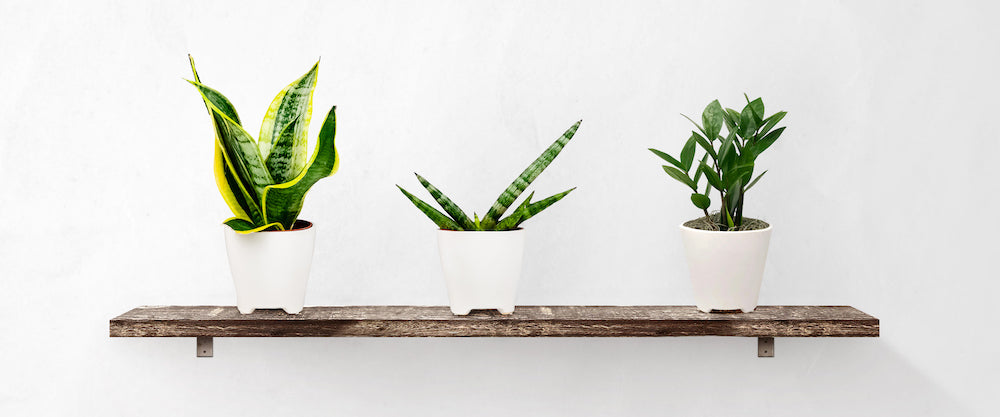Houseplants for sale online