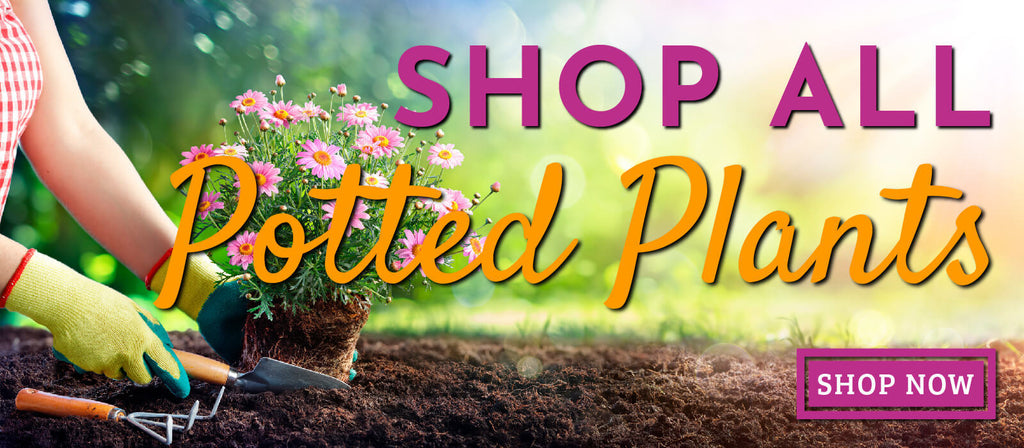 shop all plants banner