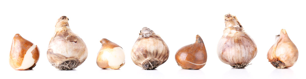 Bulb size does matter - row of bulbs