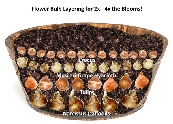 secrets of flower bulb layering for more blooms - whiskey barrel illustration