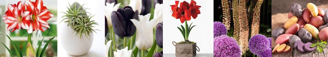 New items for Easy to Grow Bulbs