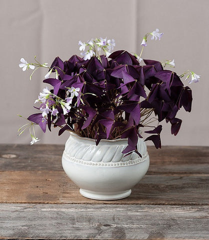 Indoor House Plants That Open And Close on toys that open and close, weeds that open and close, succulents that open and close, flowers that open and close, windows that open and close,