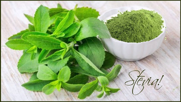 Natural Stevia Fresh leaves and dried
