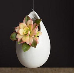 succulent blooming egg with ceramic egg vase and aeonium kiwi