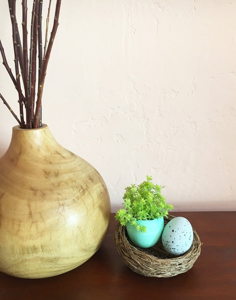 succulent eggshell planter displayed in a birds nest
