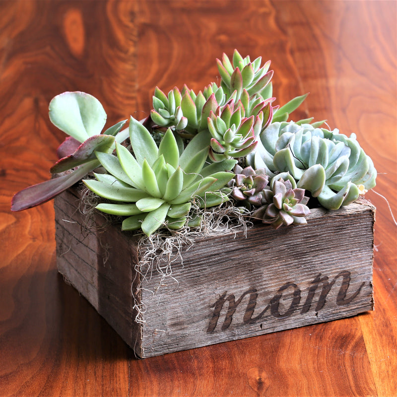 Succulent Garden in Reclaimed Wood Planter with Mom