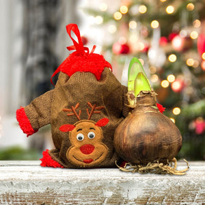 products/AmaryllisGift_ReindeerBag-Bulb_ETGB-SHUT.jpg