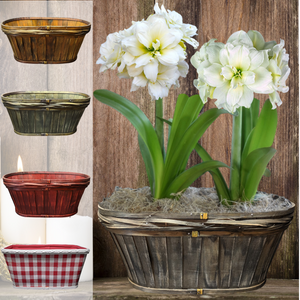 products/Amaryllis_Snowdrift__Oval_Baskets_Duo__Parent_DD.SHUT.png