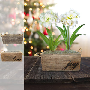 products/Amaryllis_Snowdrift__Wood_Planter__Parent_DD.SHUT.jpg