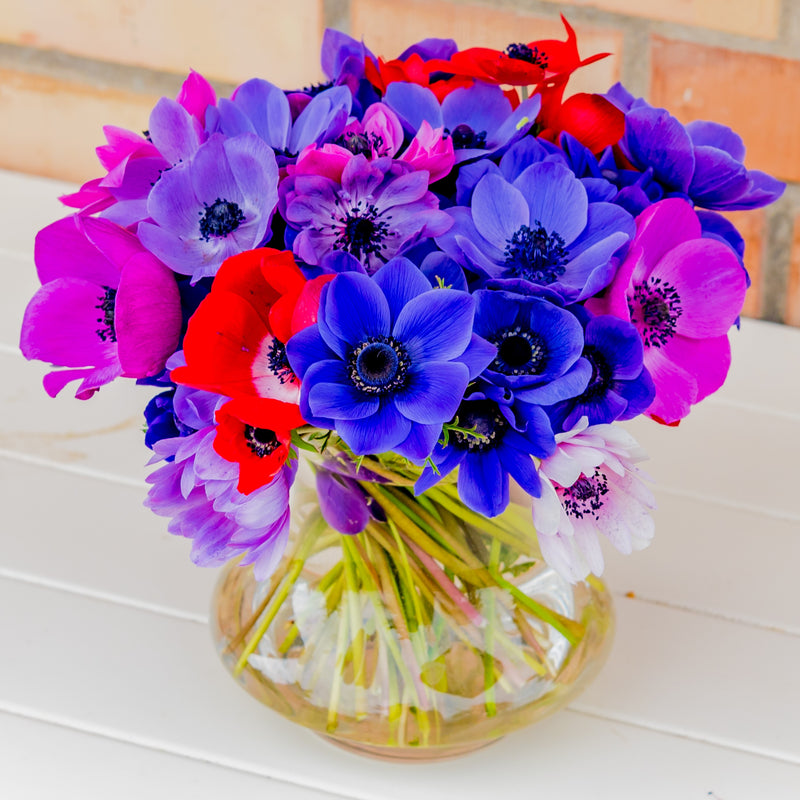 Mixed color anemone flowers