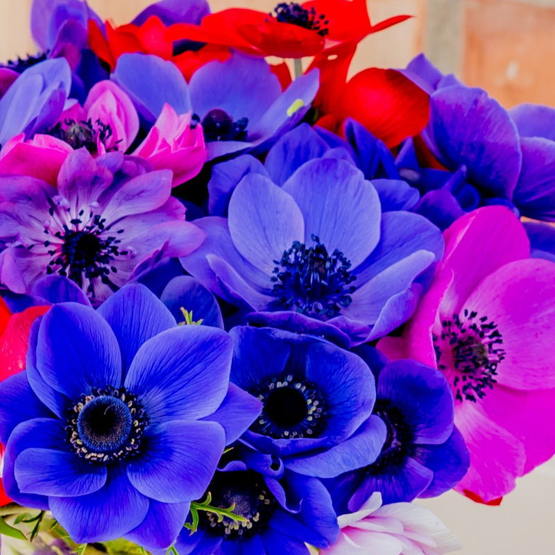 Purple, Blue, Pink, Red Anemone Flowers