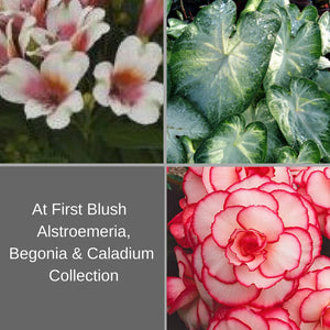 White & Pink Passion Flower, Begonia & Elephant Ear For Sale