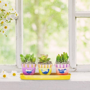 Succulent Trio Bird Ceramic Planter Kit