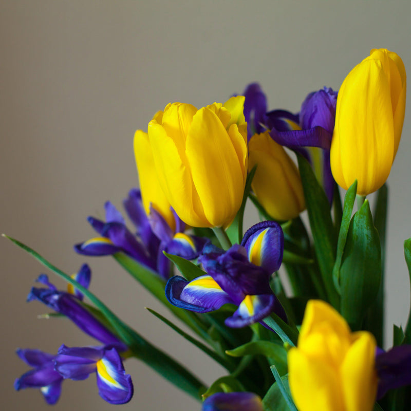 Imperial Bouquet - Tulip and Dutch Iris Blend