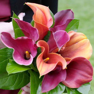 products/Calla_Tropical_Sunset_Collection_Square.SHUT.jpg