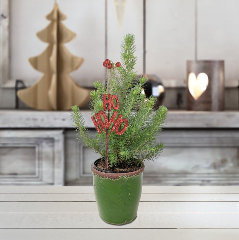 Mini Christmas Tree Gift - Free Shipping