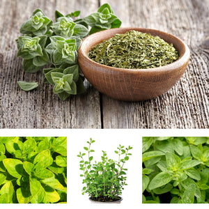 Herb Trio Mixes