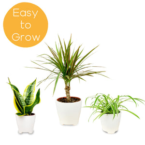 Easy to Grow Houseplant Collection