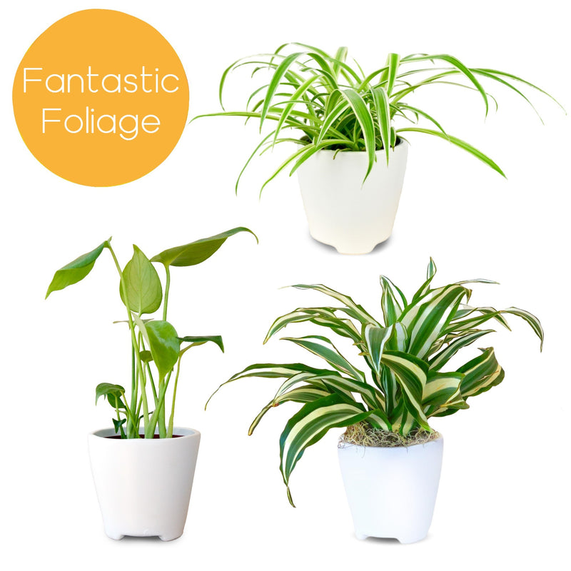 Fantastic Foliage Houseplant Collection