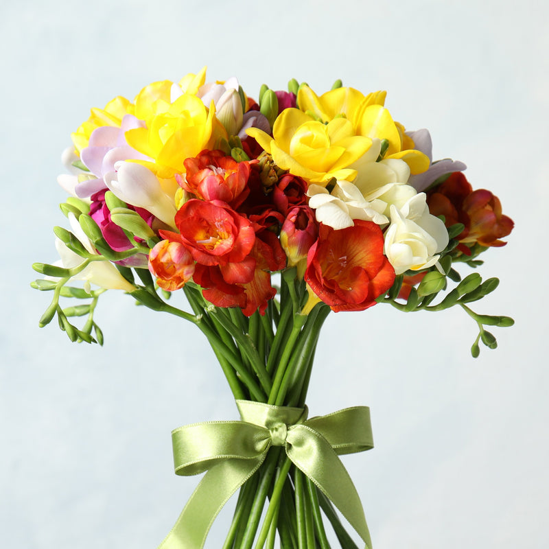 Freesia Fire & Ice Collection