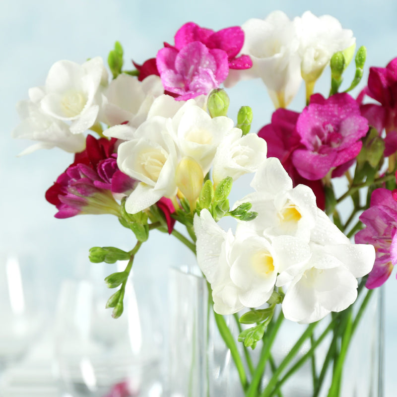 Freesia Romance Collection