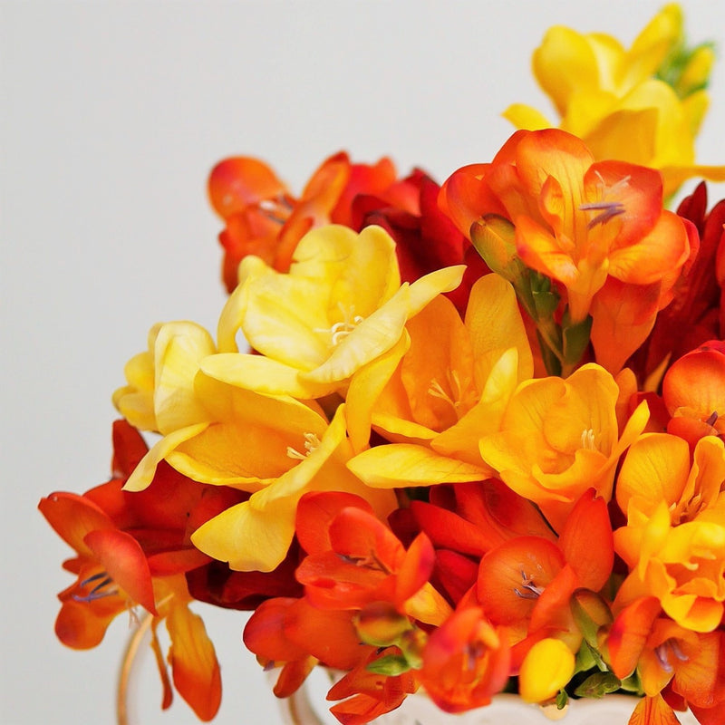 Freesia Burning Embers Collection