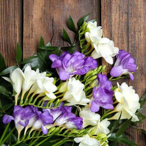 Freesia Clear Skies Collection