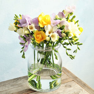 Freesia Sunny Day Collection