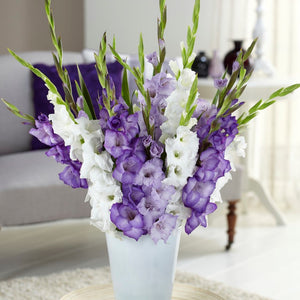 Gladiolus Clear Skies Collection